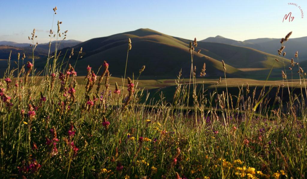 I fiori dei Monti Sibillini