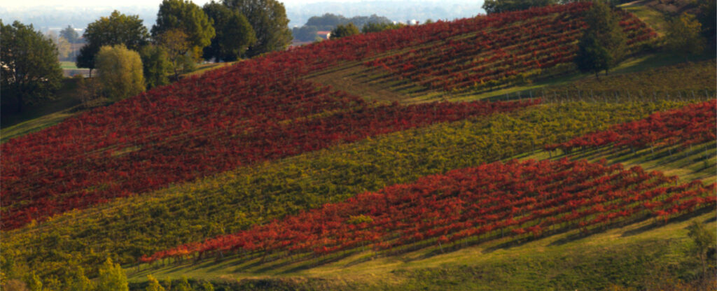 foliage in Emilia Romagna: i vigneti di Castelvetro di Modena