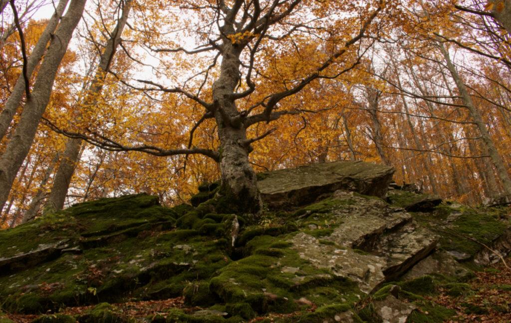 Foliage in Emilia Romagna: le cascate del Dardagna