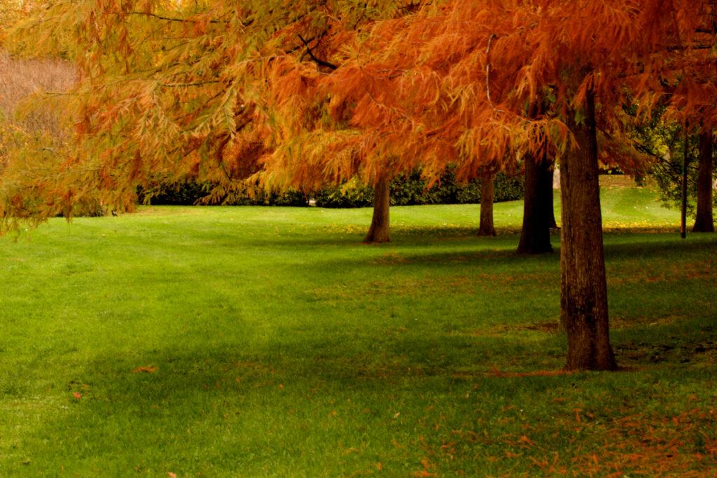 Foliage ai Giardini Margherita a Bologna