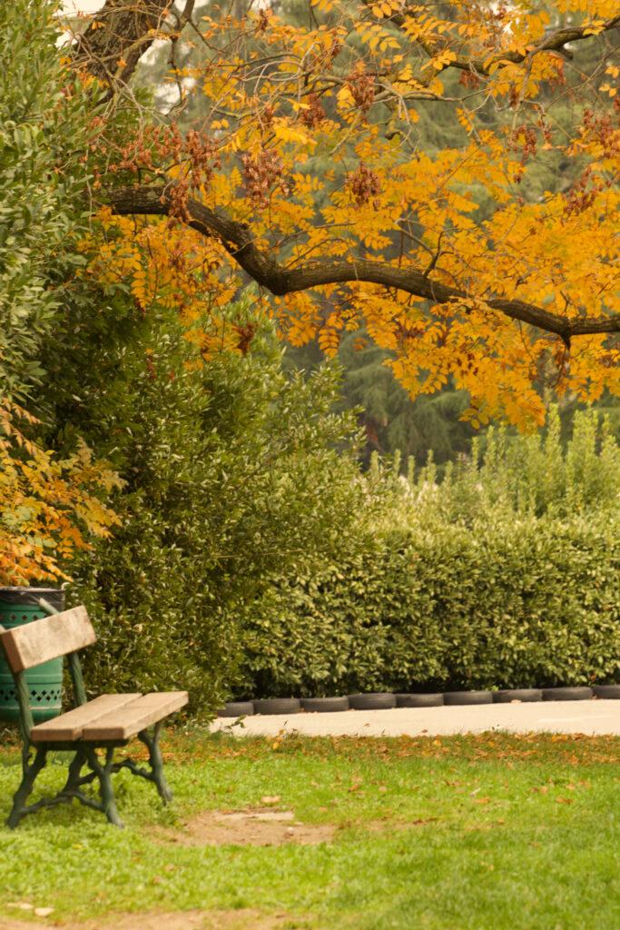 Foliage a Bologna ai Giardini Margherita