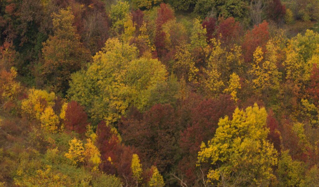 Foliage a Villa Ghigi a Bologna