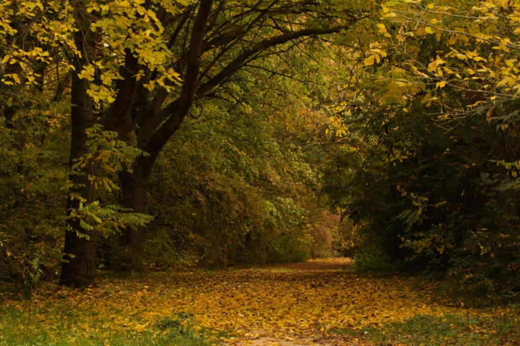 Foliage a Bologna al Parco dell'Arboreto