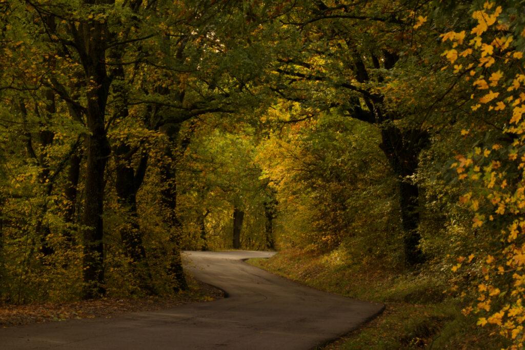 Foliage a Bologna e dintorni in Via Moglio