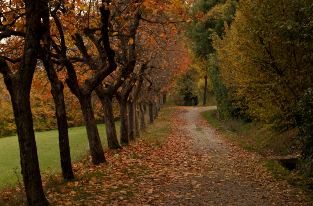 Foliage a Bologna a Villa Ghigi