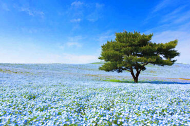 le più belle fioriture del mondo