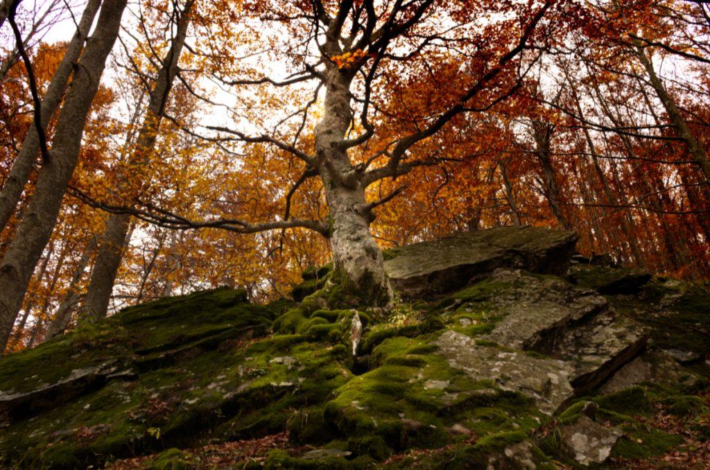 albero alle cascate del Dardagna